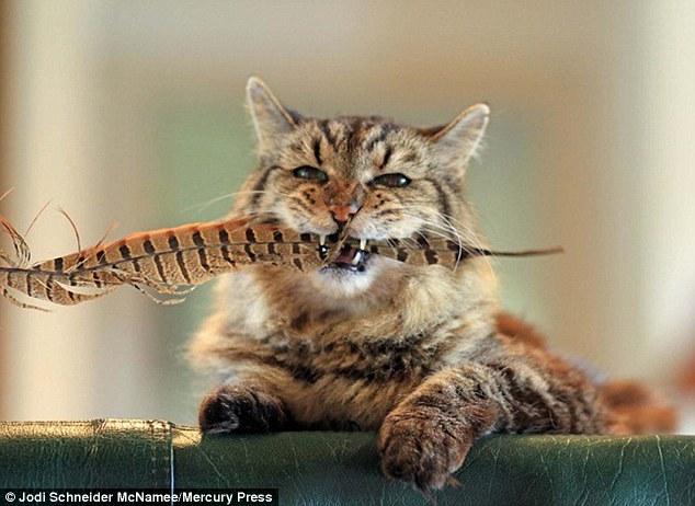 <center><b>Самый старый кот покоряет интернет</center></b>
