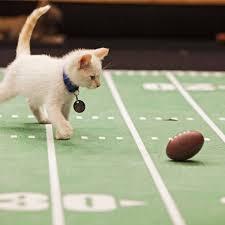<center><b>Американцы проведут футбольные соревнования для котят</center></b>