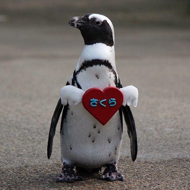 В Японии прошел парад пингвинов (видео)