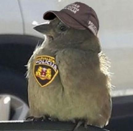 В Риге служит воробей-полицейский