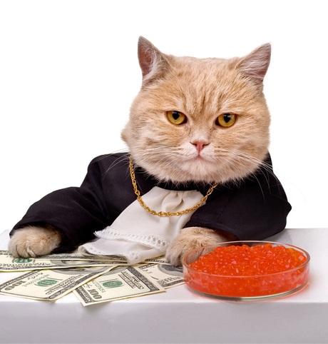 В США коты получили наследство
