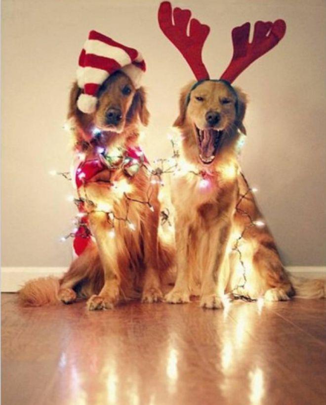 Собаки не дали американцу выбросить елку (ВИДЕО)
