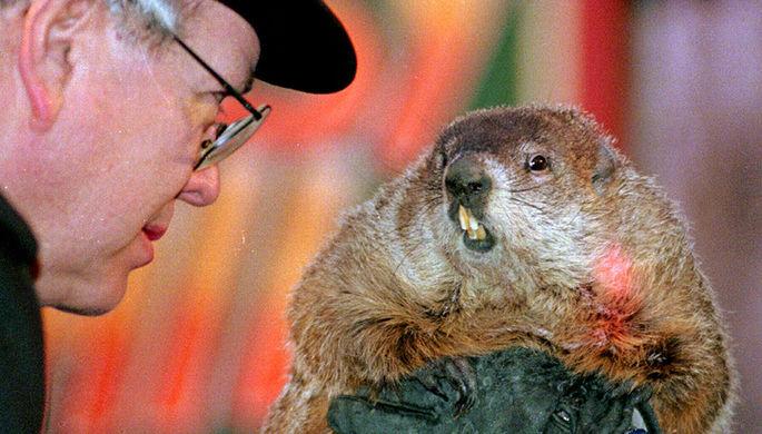 В Московском зоопарке проснулись степные сурки