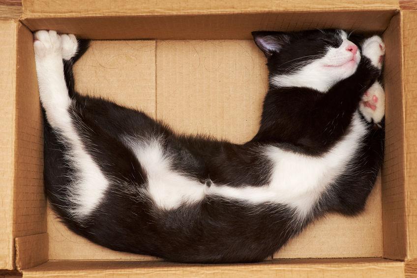 Учёные объяснили любовь кошек к коробкам