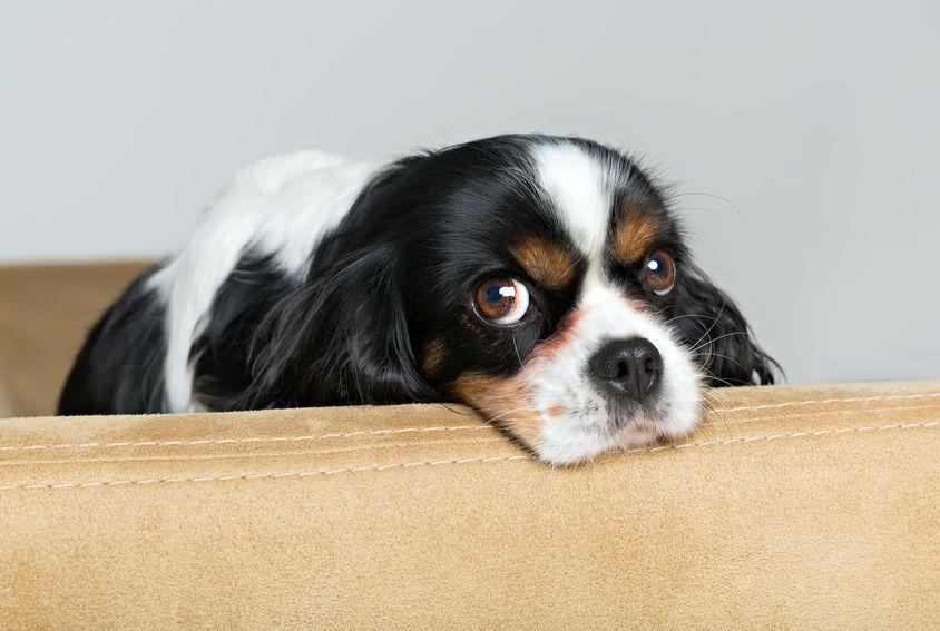 С помощью чего собаки манипулируют людьми?