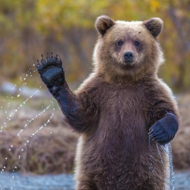 <center><b>На Камчатке обнаружили уникального медведя</center></b>