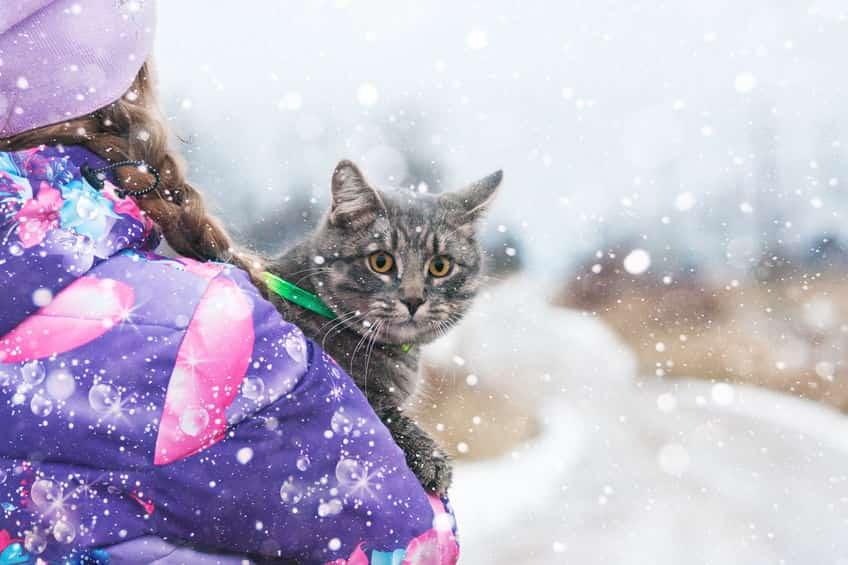 Голландцы призвали посадить кошек на поводок
