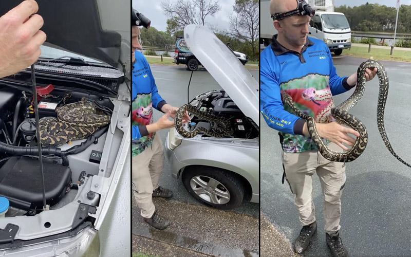 Австралийка нашла под капотом свой машины «милый» сюрприз