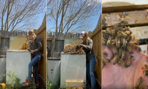 Американка голыми руками переселила пчел из мусорки в улей