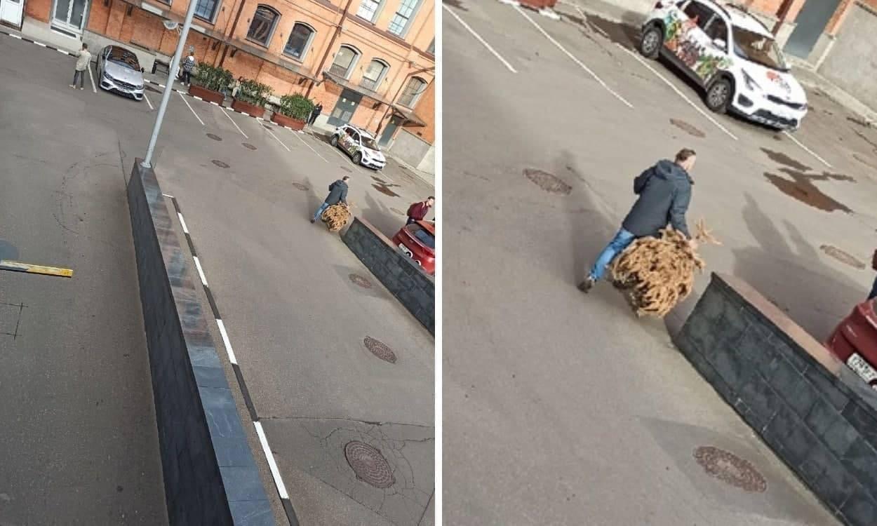 Житель Москвы два года не мог выкинуть елку