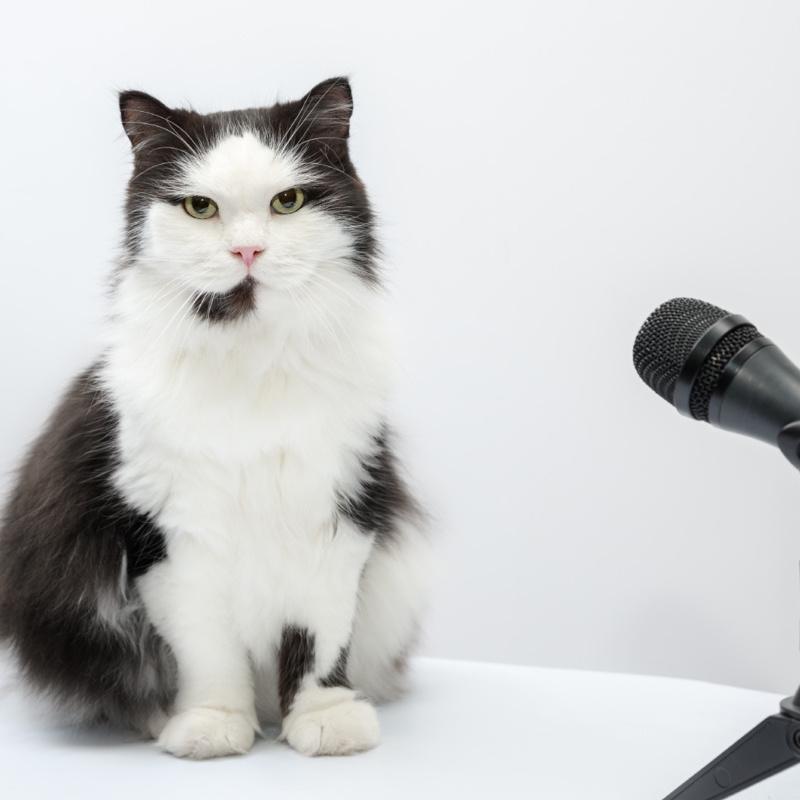 <center><b>В Саратове появился первый кот-радиоведущий</center></b>