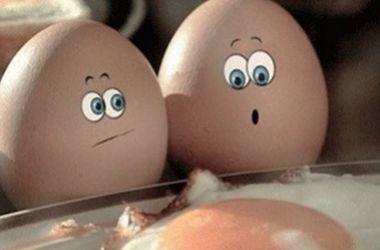 <center><b>Немецкая курица снесла огромное яйцо</center></b>